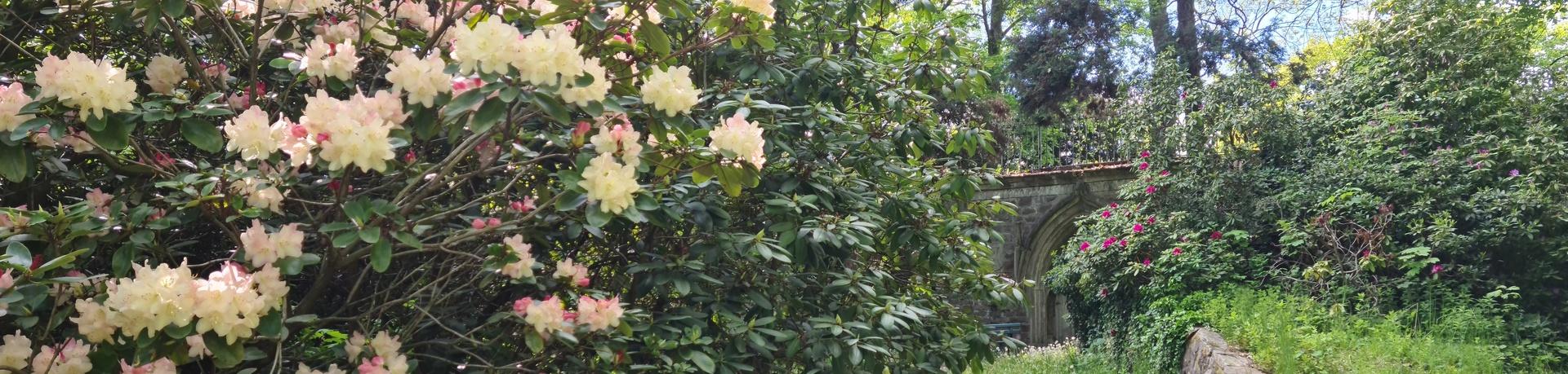 Park Gb Rhodedendron